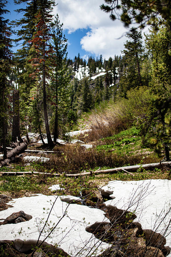 Snow Photograph - Paradise Meadow in July by John Heywood