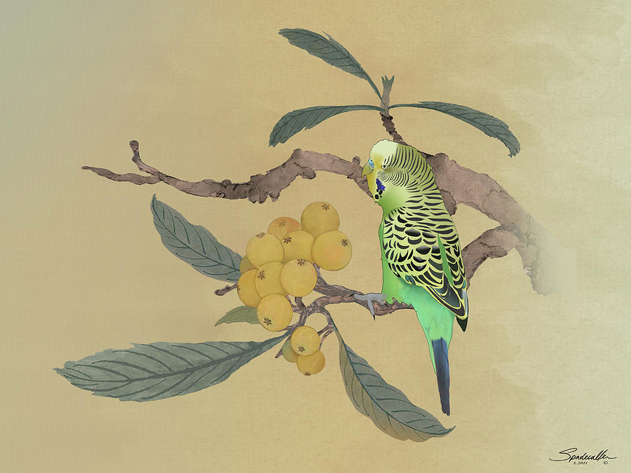 Parakeet in Loquat Tree by Spadecaller