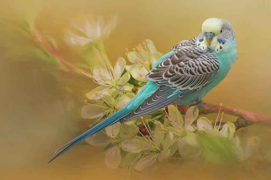 Parakeet Sitting On a Limb by Cindy Lark Hartman