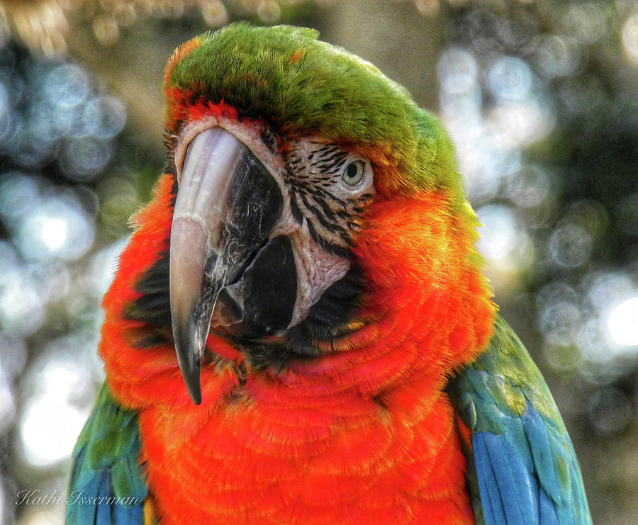 Parrot in Pose by Kathi Isserman