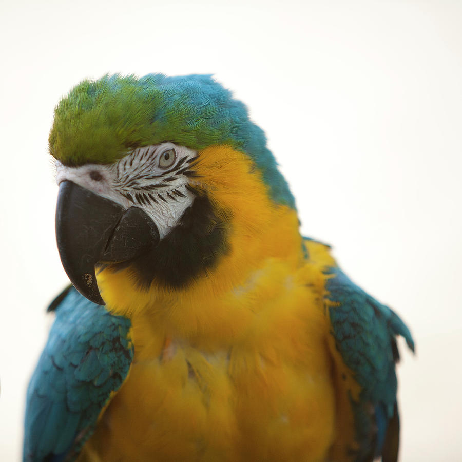 Parrot Photograph by Jens Karlsson