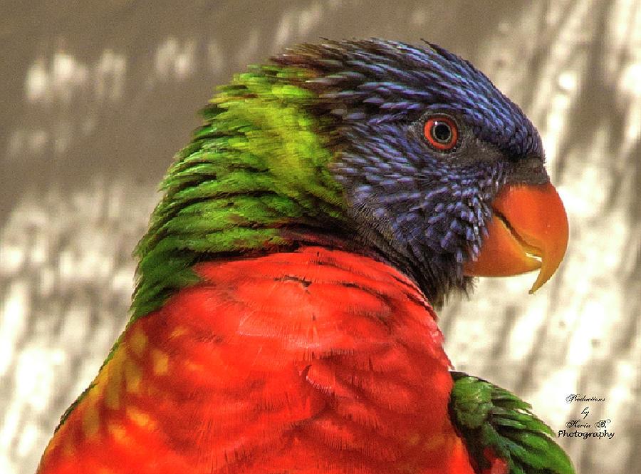 Parrot by Kevin Banker