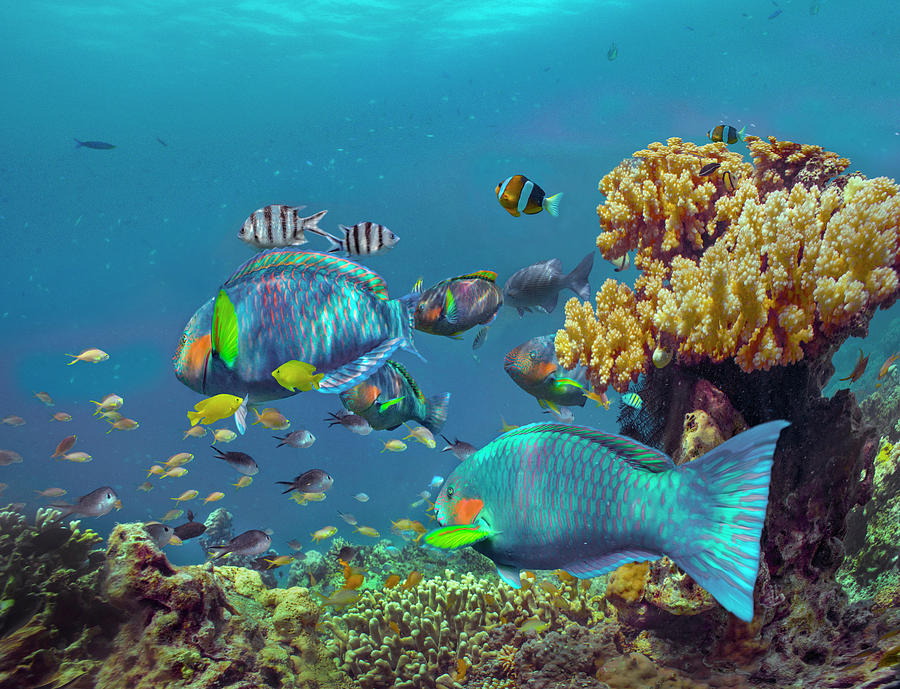 Parrotfish, Anemonefish, And Sergeant Major Damselfish, Bohol Island, Philippines by Tim Fitzharris