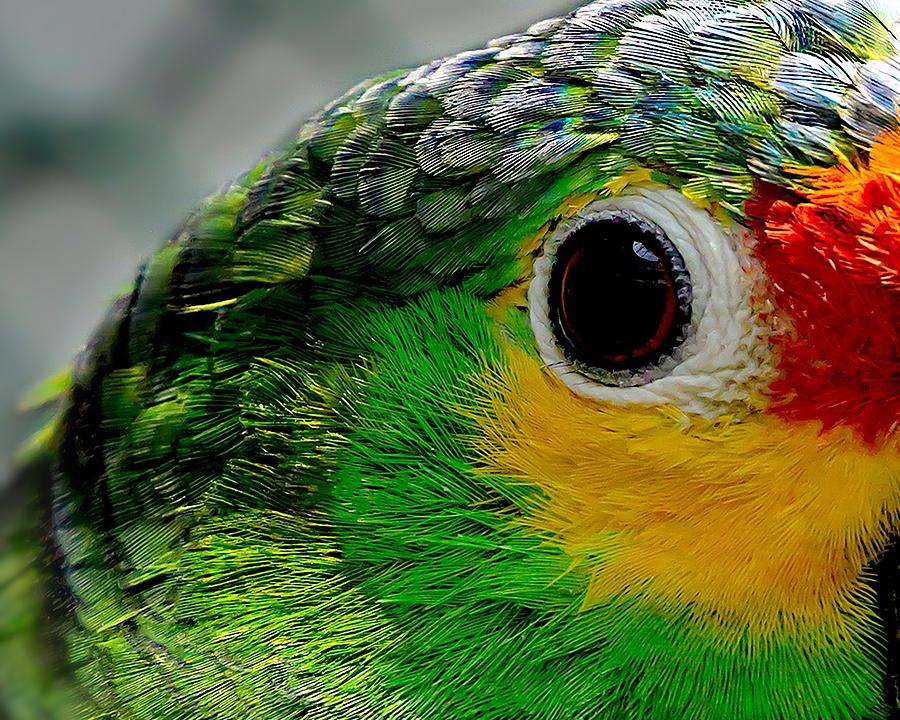 Parrots eye by Silvia Marcoschamer
