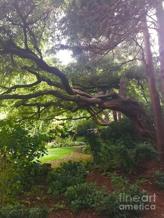 Parsons Gardens Park by Suzanne Lorenz