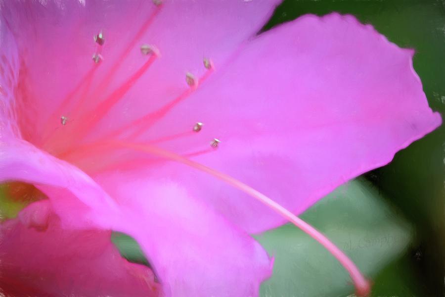 Particular Petals by Michael Campbell