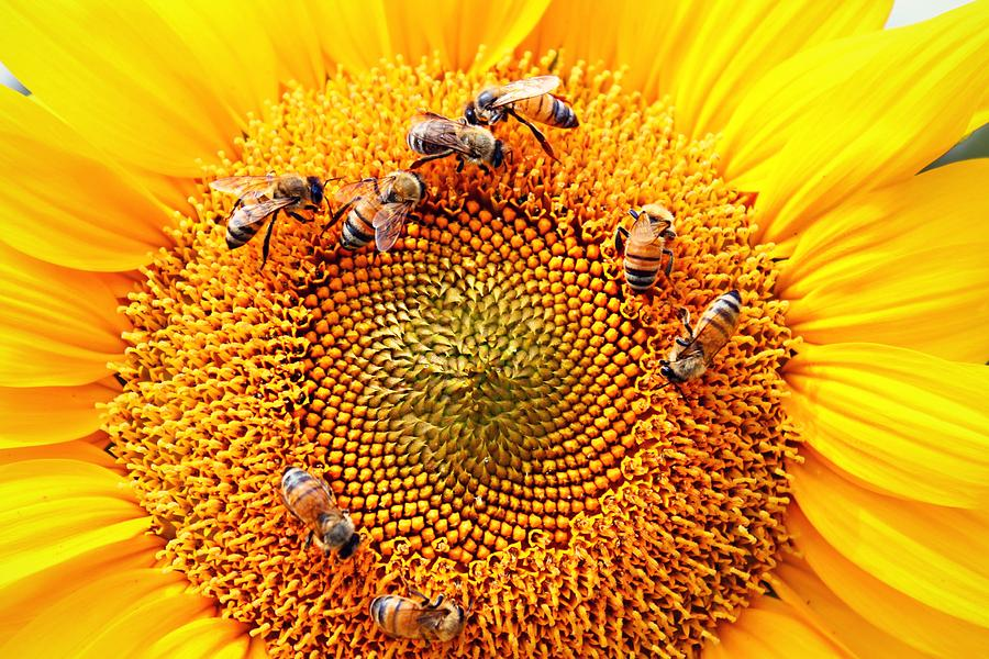 Honeybees Photograph - Party by Candice Trimble