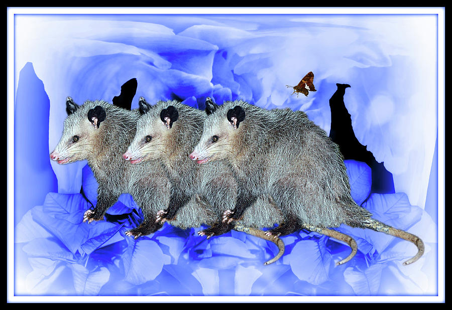 Party Of Possums Digital Art
