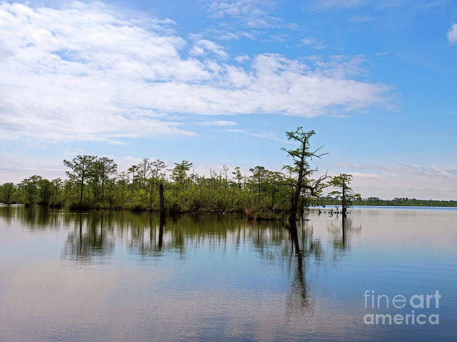 Pasquotank River Photograph - Pasquotank River North Carolina by Louise Heusinkveld