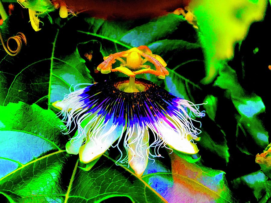 Passion Flower for Pele in Moonlight Aglow  by Joalene Young
