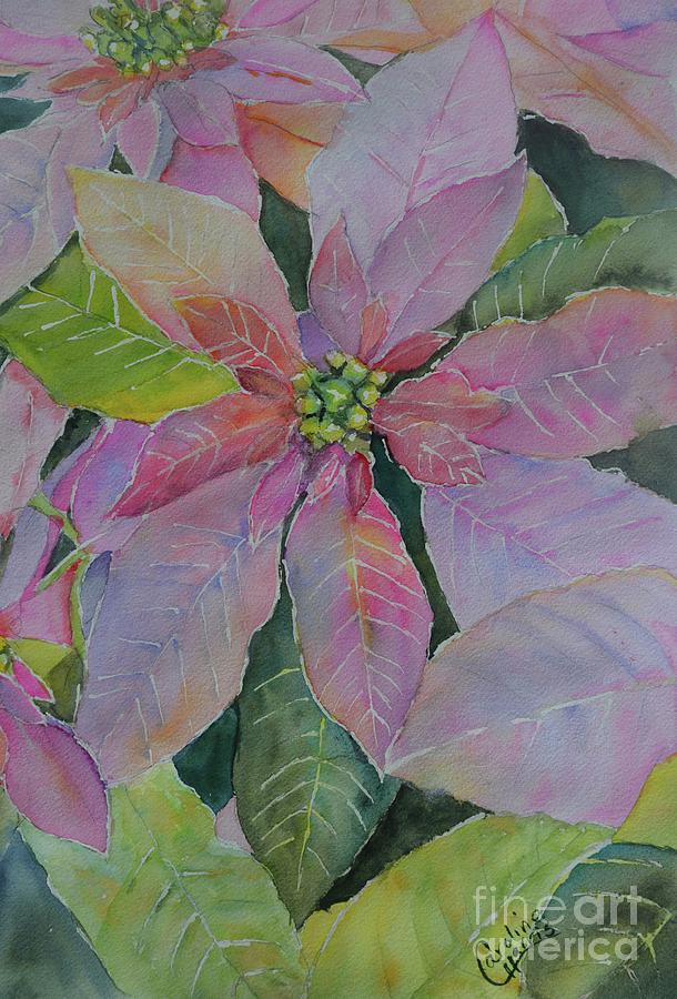 Passionate Pink Poinsettia's by Caroline Harris
