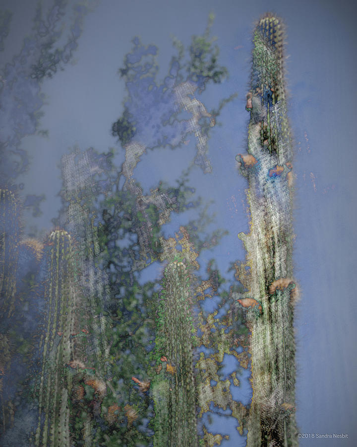 Pastel Blue Cacti by Sandra Nesbit