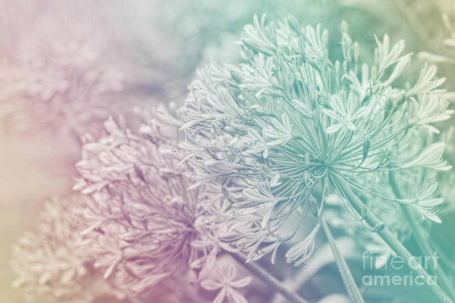 Pastel Dreams by Kaye Menner by Kaye Menner