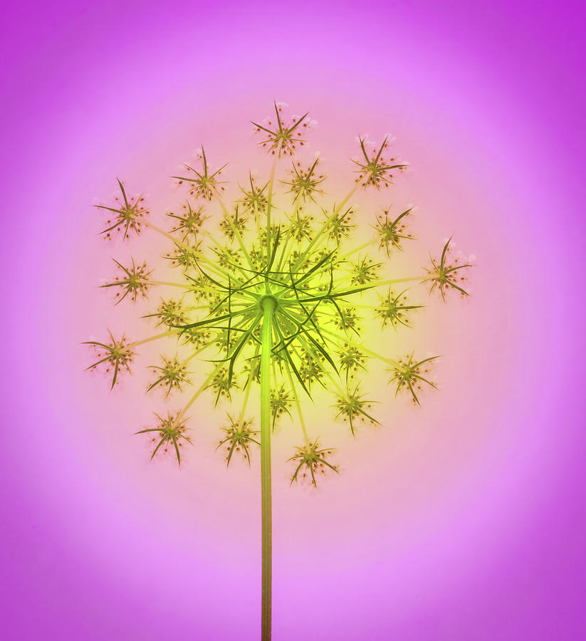 Pastel Firework by Jean Noren