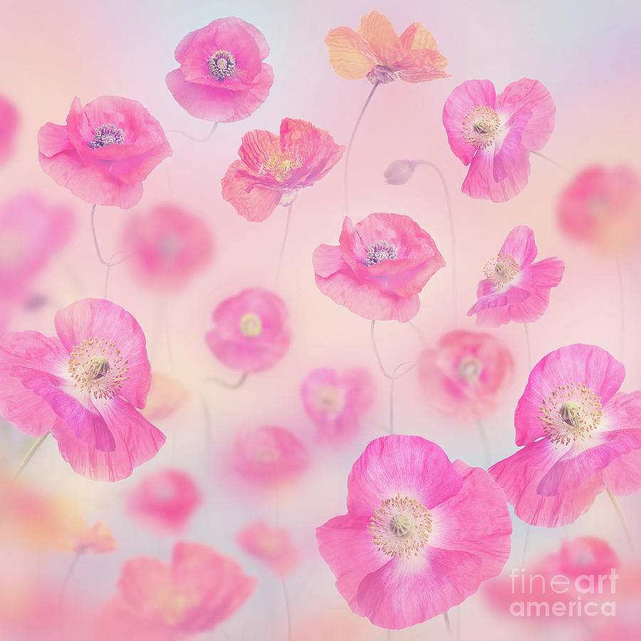 Pastel Floral Background With Poppies Photograph By Svetlana Foote