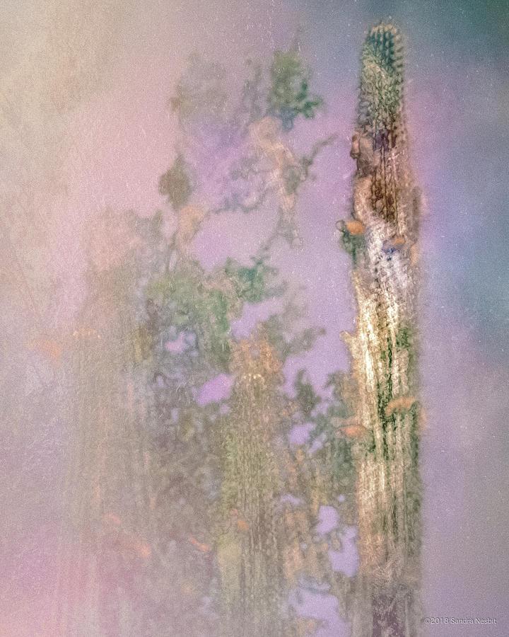 Pastel Pink Cacti by Sandra Nesbit