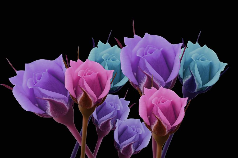 Pastel Roses On Black by Art Shack