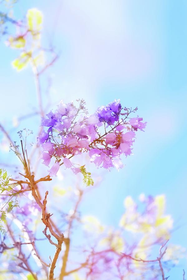 Flower Photograph - Pastels In The Sky by Az Jackson