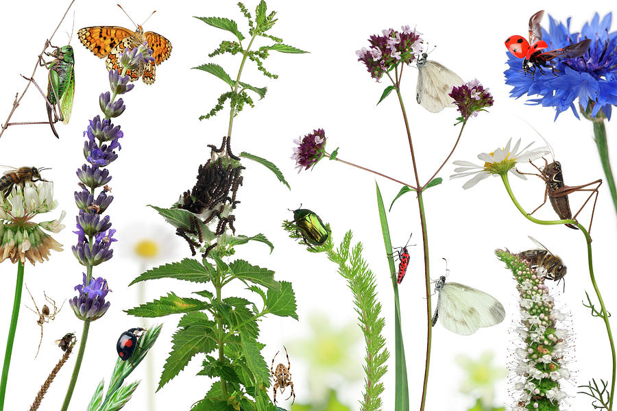 Pastoral Composition Of Insects Photograph by Life On White