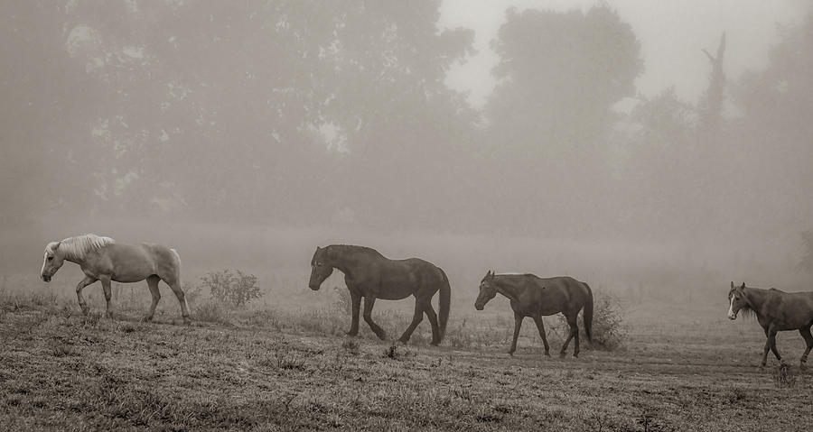 Pasture Friends, Black and White by Marcy Wielfaert