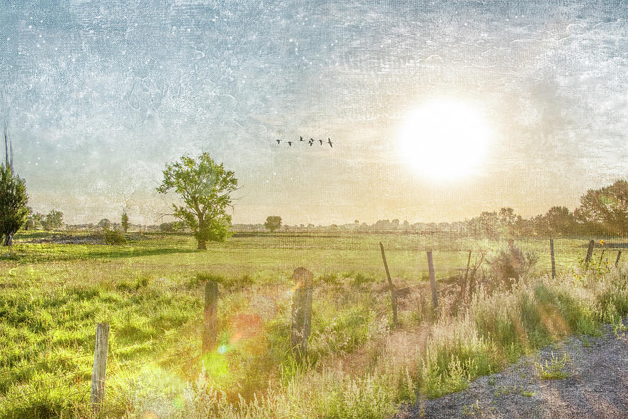 Pasture Sunrise by Ramona Murdock
