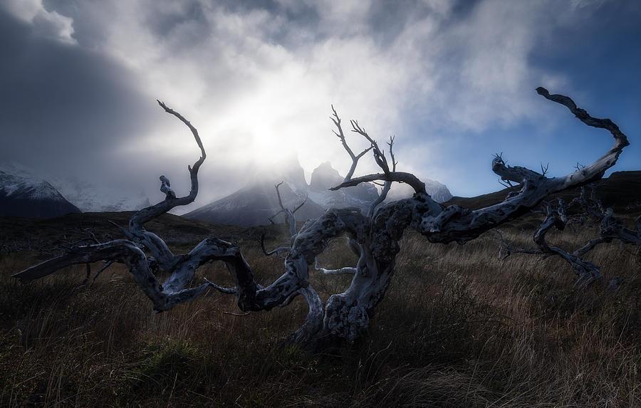 Patagonian Tree Photograph