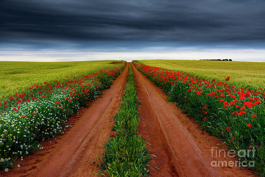 Nature Photograph - Path Between Fields by Vicente Sargues