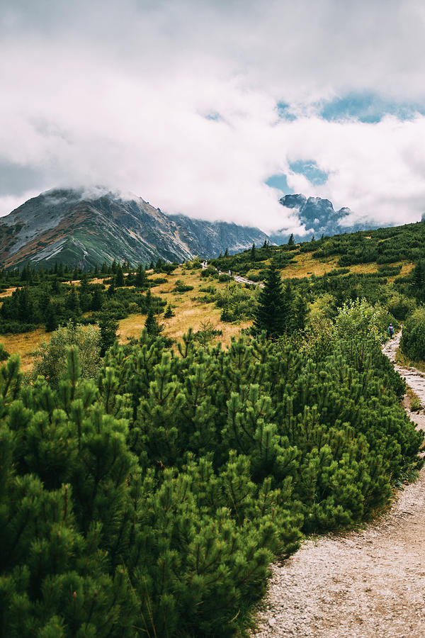 Path in the Summer Mountains by Pati Photography