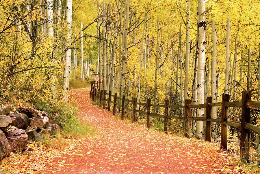 Path Through Aspens Trees Photograph by Kathy Van Torne