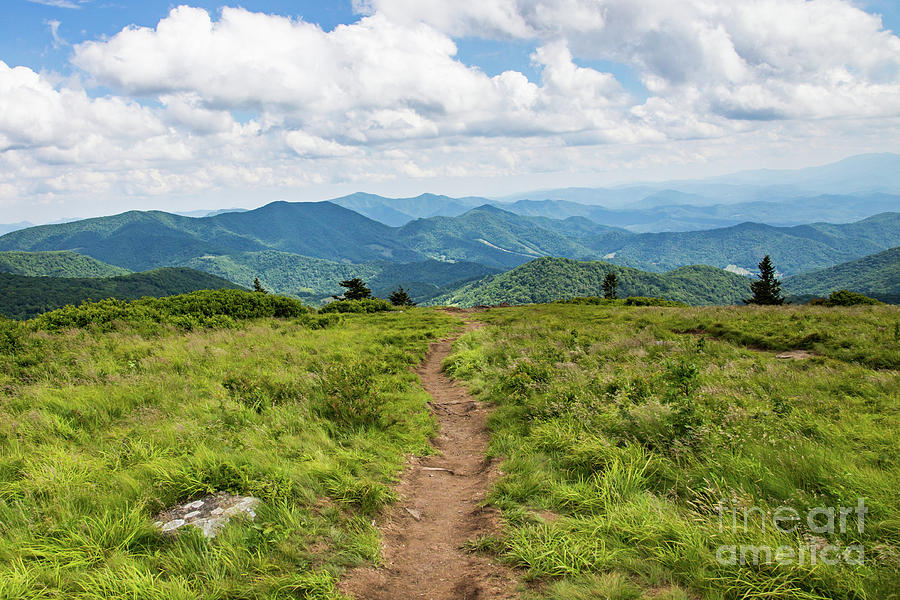 Path to a Mountain View by Lisa Lemmons-Powers