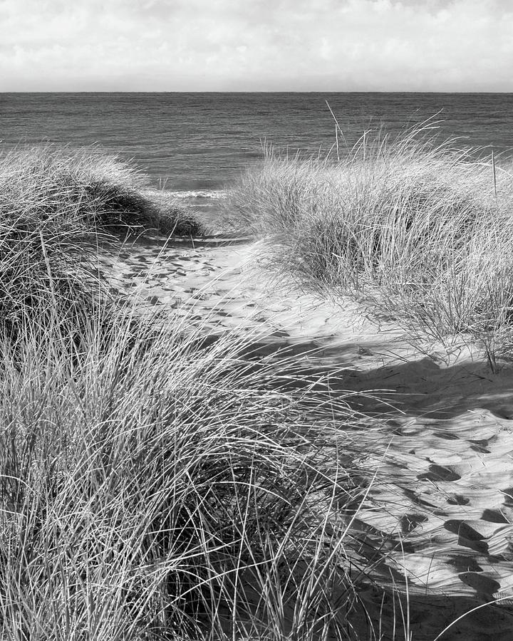 Path To Paradise Black and White by Kathi Mirto