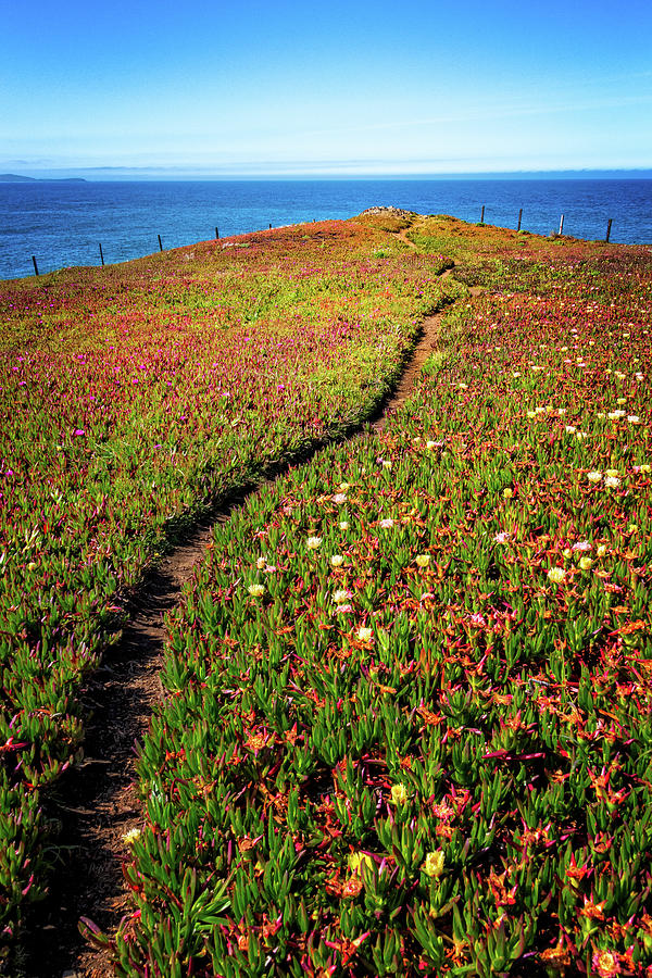 Path to the Point by Carolyn Derstine