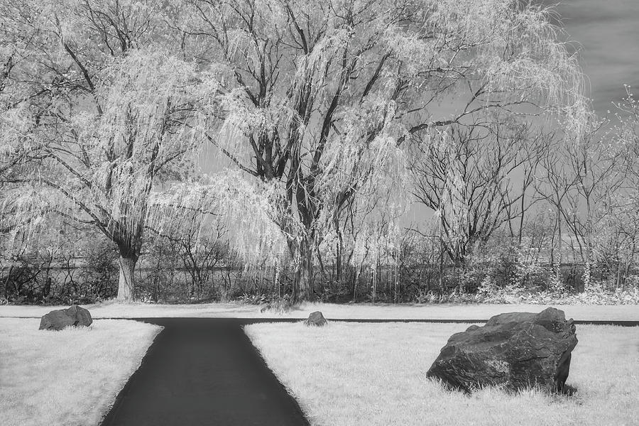 Path To Willow Trees by Susan Candelario