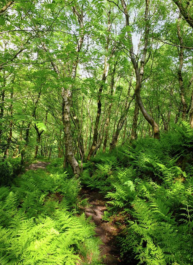 Pathway through Ferns by Philip Openshaw
