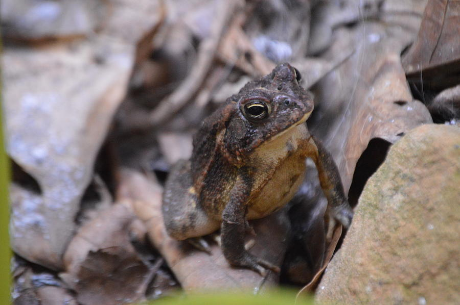 Patience of The Toad by Lesa Fine