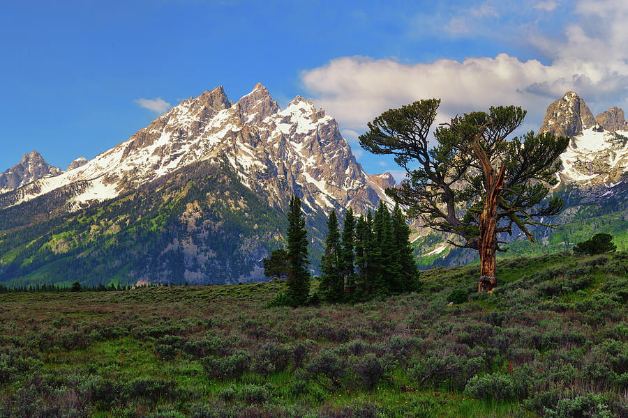 Patriarch Tree and the Cathedral by Greg Norrell