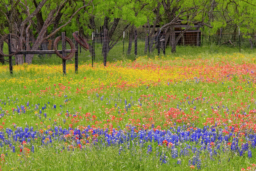 Adam Jones Photograph - Pattern Of Texas Paintbrush by Adam Jones