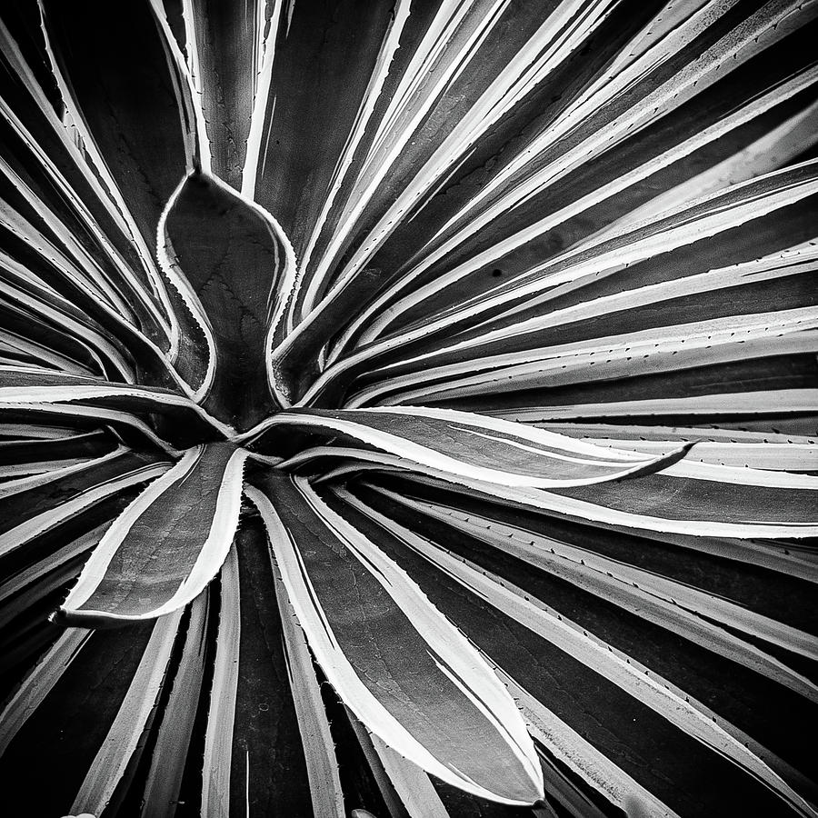 Patterns and Plants Black and White by Julie Palencia