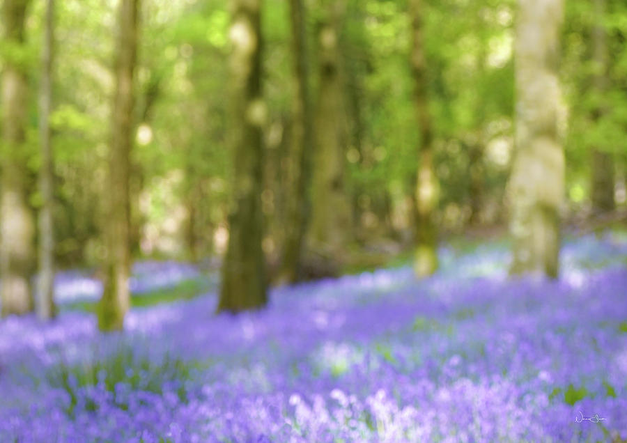 Pause Among The Bluebells by Norma Slack