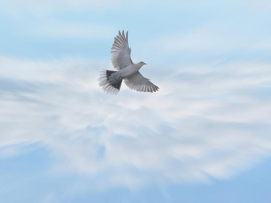 Peace by Jennifer Grossnickle