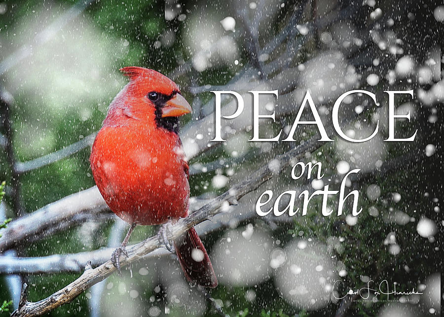 Peace on Earth w/Cardinal by Carol Fox Henrichs