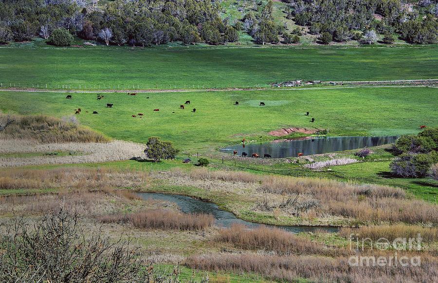 Durango Photograph - Peaceful Farm by Mae Wertz