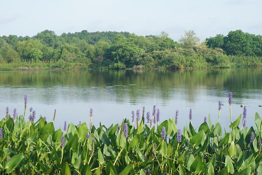 Peaceful Lakeside by Stephanie Pieczynski