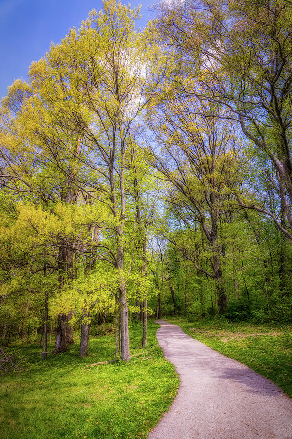 Peaceful Pathway by Tom Mc Nemar