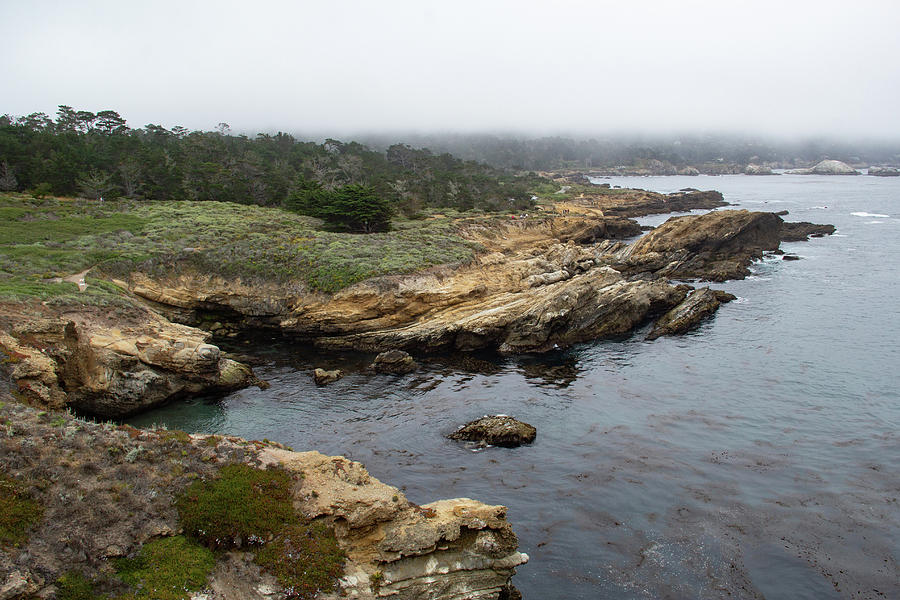 Peaceful Point Lobos by Marie Leslie