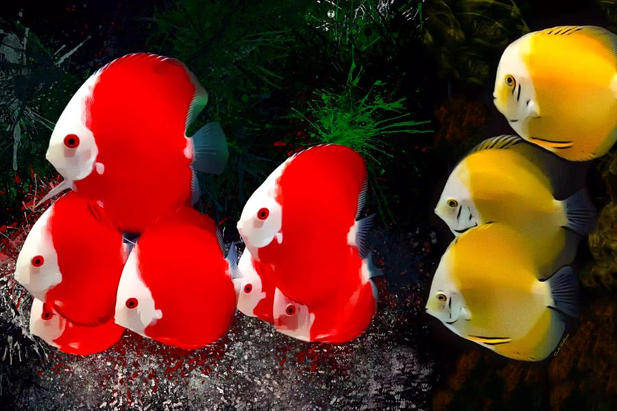 Peaceful School Of Discus Fish Digital Art By Scott Wallace Digital Designs