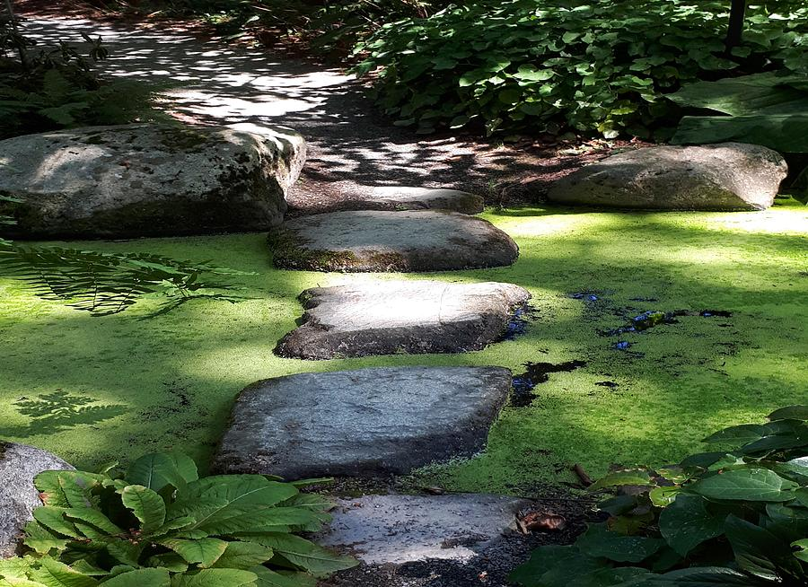 Peaceful Step by Nikki Dalton
