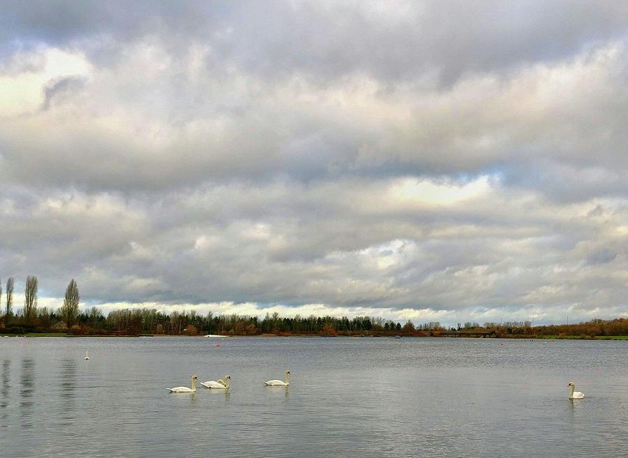 Peaceful Swan Lake by Natalie Holland