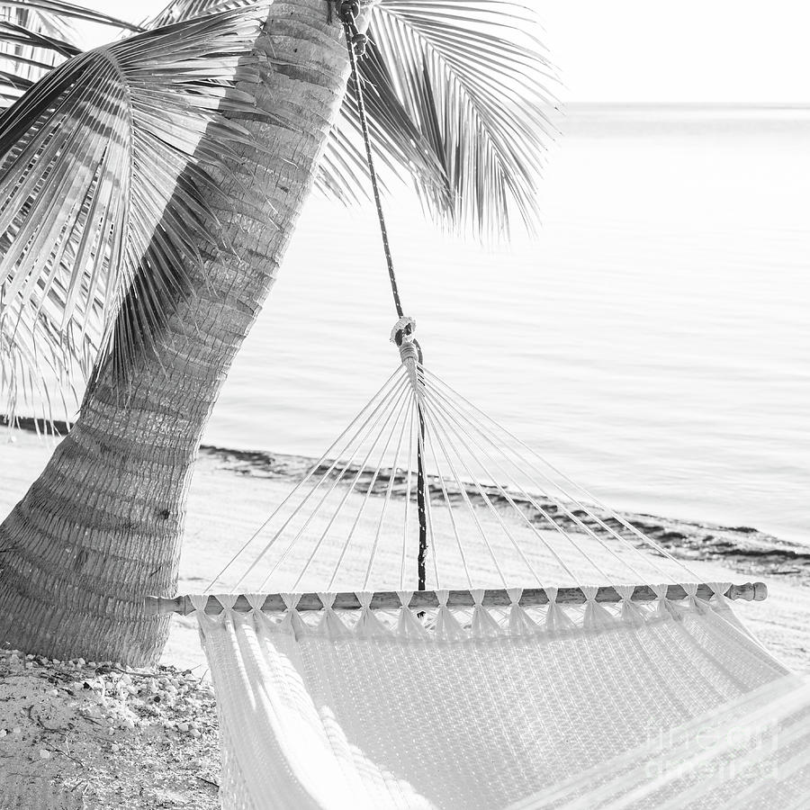 Peaceful Vacation Hammock Black and White by Tim Hester