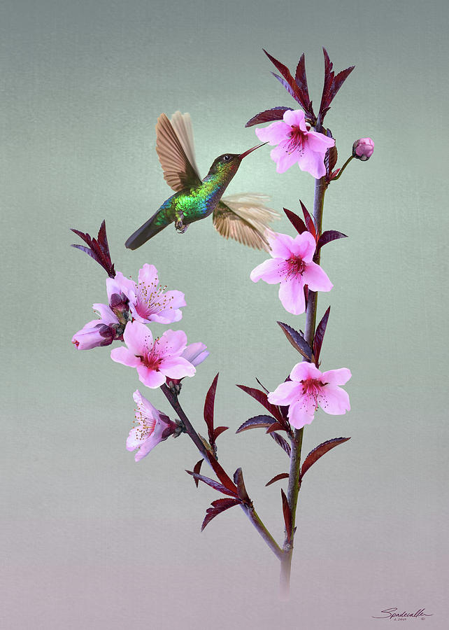 Peach Blossoms and Hummingbird by Spadecaller